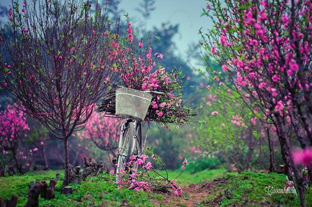 Mùa xuân nho nhỏ