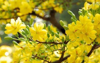 Con thấy mùa xuân ngập tràn lồng ngực