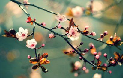 Mùa xuân cũng biết buồn