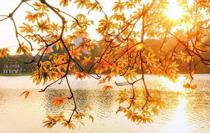Hà Nội trong tim tôi: Thu Hà Nội tràn nỗi nhớ trong những bản tình ca, bởi vì mùa thu tôi ở lại…