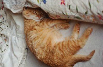 Ngủ đi! hãy ngủ! đi em!