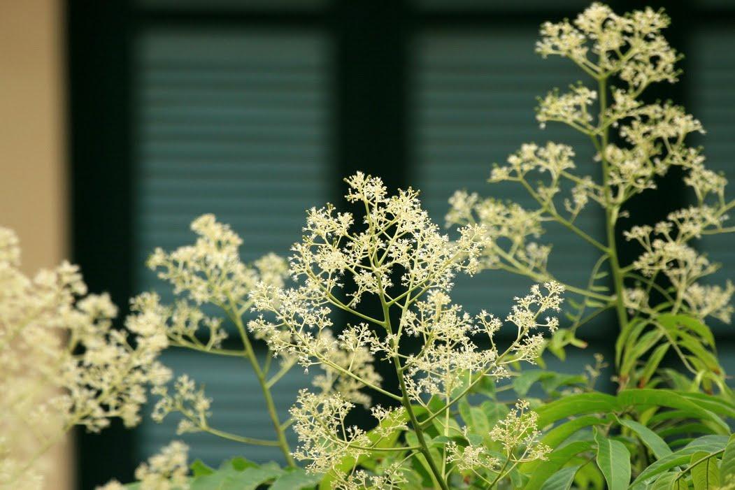 Tháng 8 ngẩn ngơ với sắc trắng của những loài hoa mang thu về đất trời…