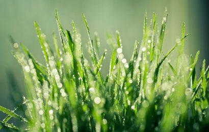 Tháng Bảy về ướt hạt mưa ngâu