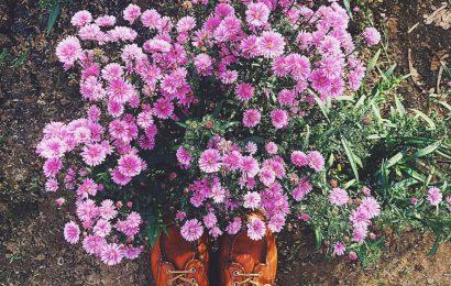Ký ức một mùa hoa