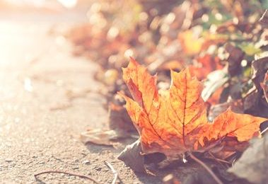 Anh có nghe mùa thu?