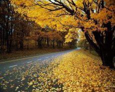 Mùa lá rụng